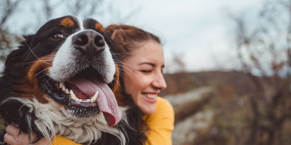 Can Dogs Help To Reduce Stress?
